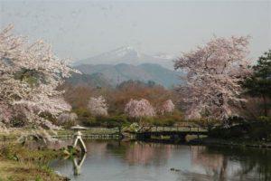 緑水苑から見える桜の中の磐梯山