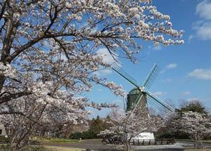 春の磐梯熱海の風車
